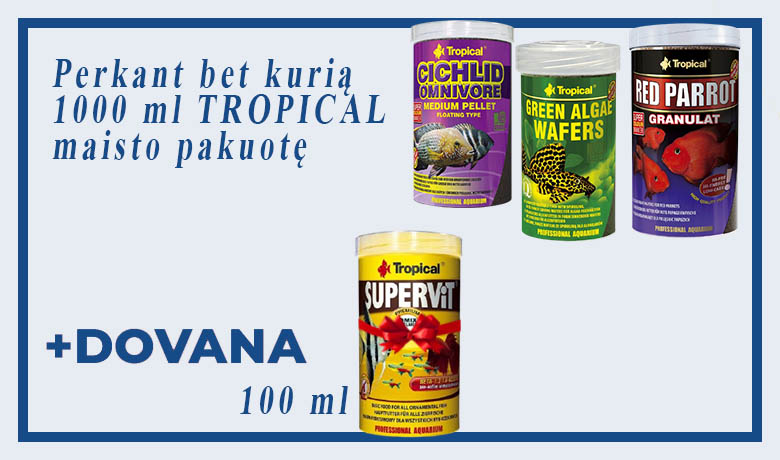 Tropical_Dovan